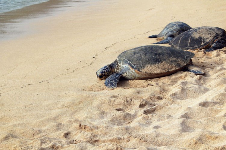 Liberare le tartarughe a Kuta