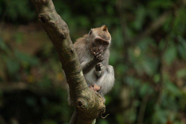 Vedere la foresta delle scimmie