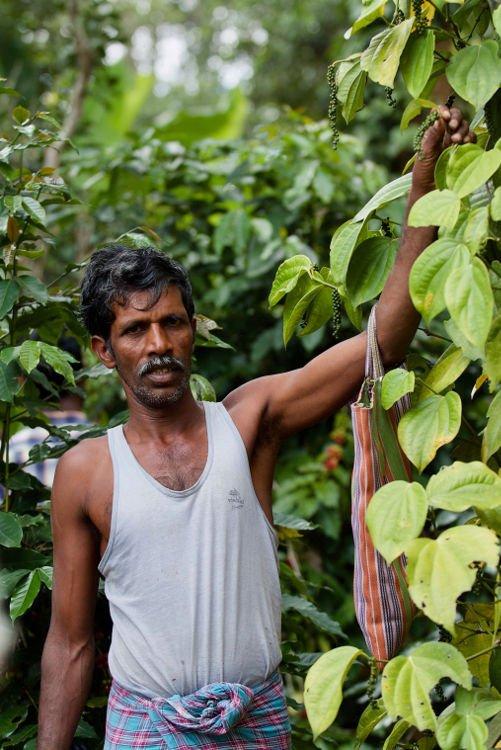 Degustare il caffè a Ubud