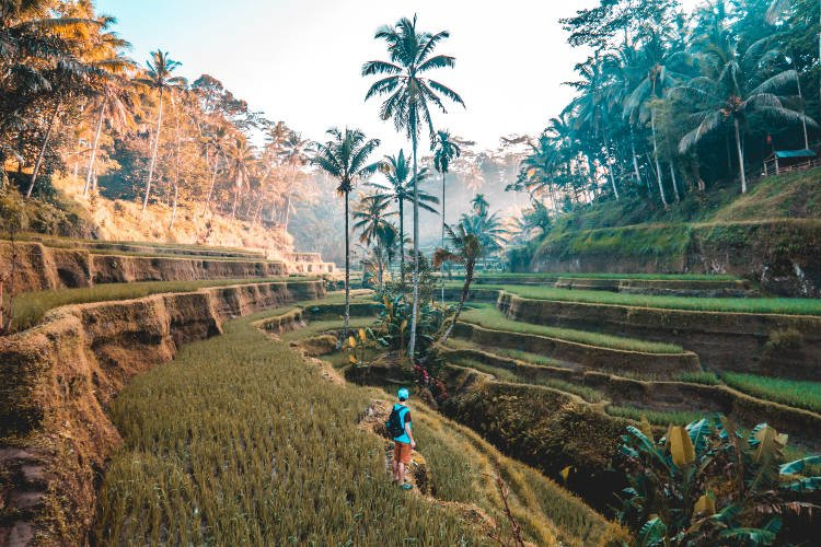 Vedere le rice terrace a Ubud