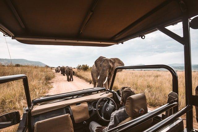 Guida al parco Serengeti