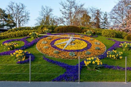 Vedere l'orologio del fiore a Ginevra