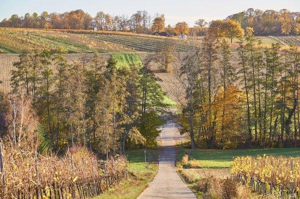 Strada del Vino Costa degli Etruschi