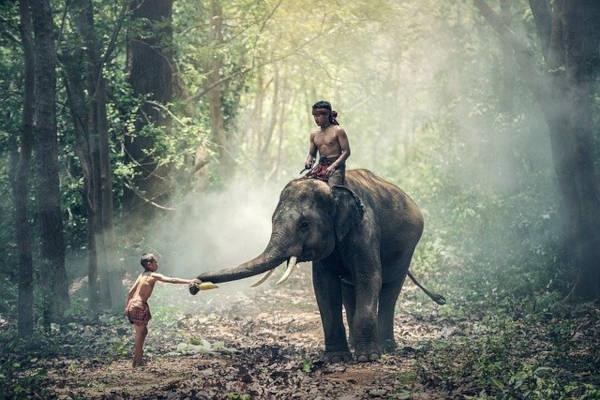 Volontariato in Asia con elefanti