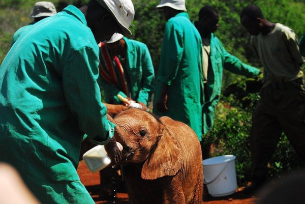 Dove fare volontariato all'estero con animali