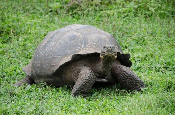Volontariato con animali alle Galapagos