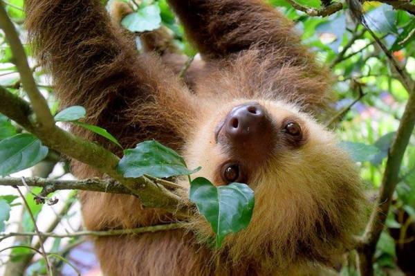 Volontariato con animali in Costa Rica