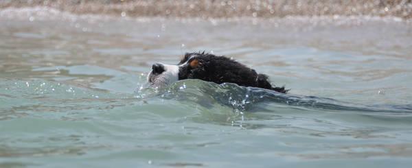 Spiaggia per cani nelle marche