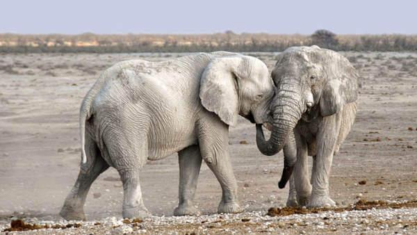 Viaggio solidale in Namibia