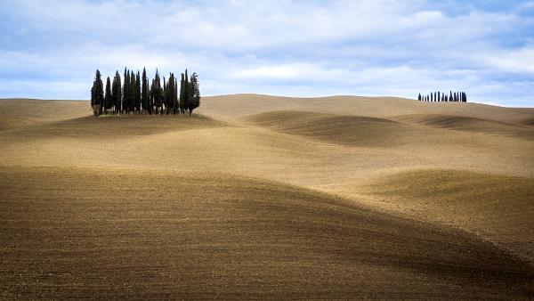Cipressi nella campagna Toscana